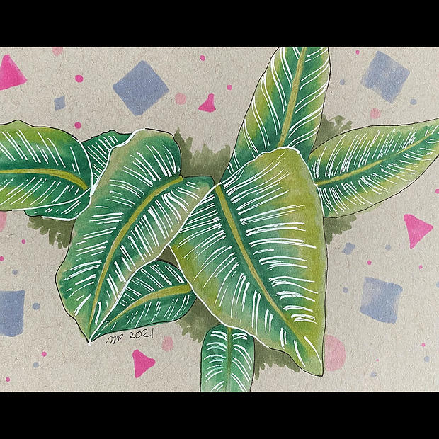 Calathea Majestica - Original Artwork - Print