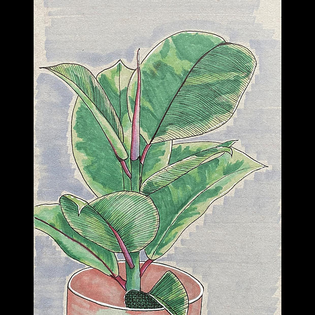 Ficus Elastica - Original Artwork - Print