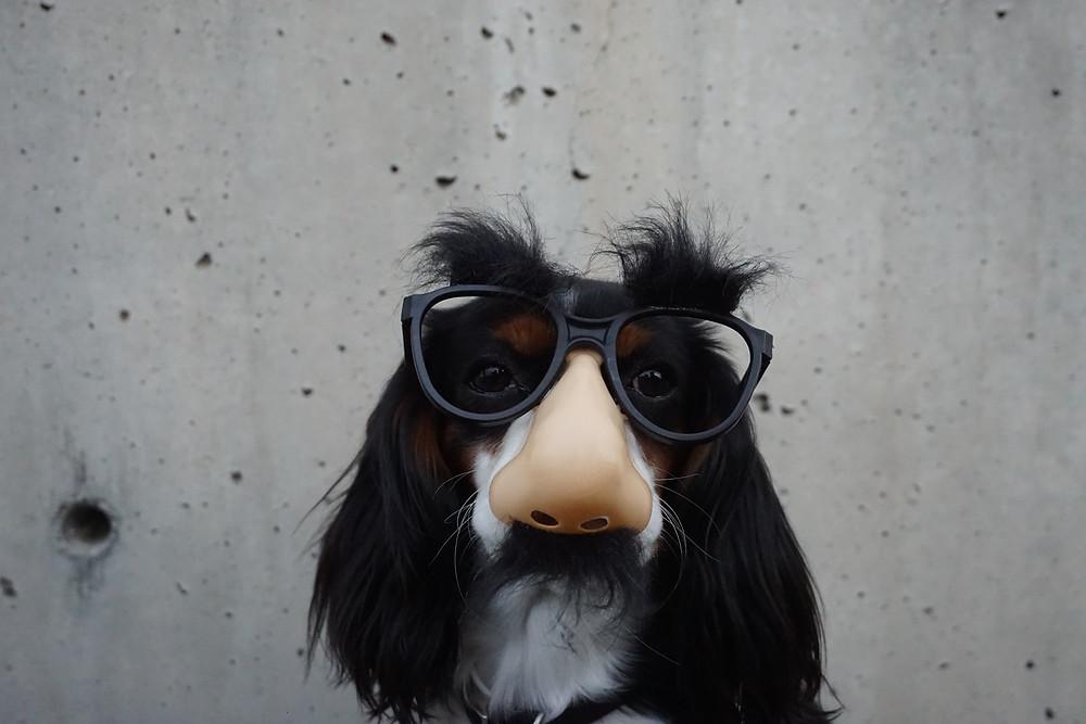 pies w okularach szpieg nos maska