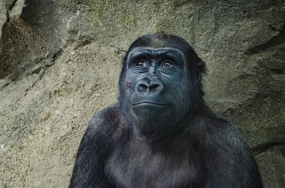 uśmiechnięta małpa