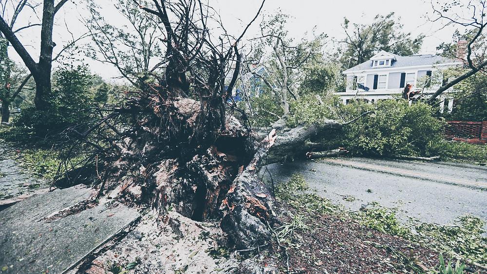 drzewo przewrócone przez huragan Florence na ulicę