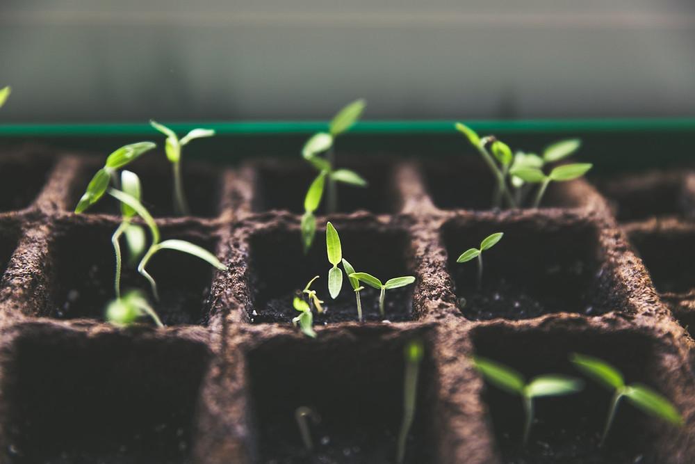 rosnące roślinki