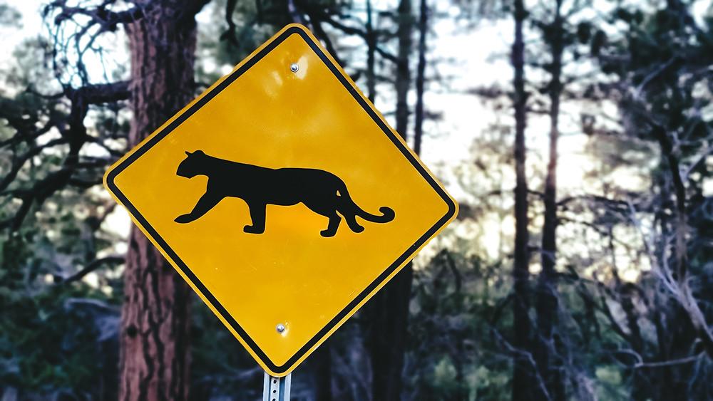 znak ostrzegawczy znak drogowy