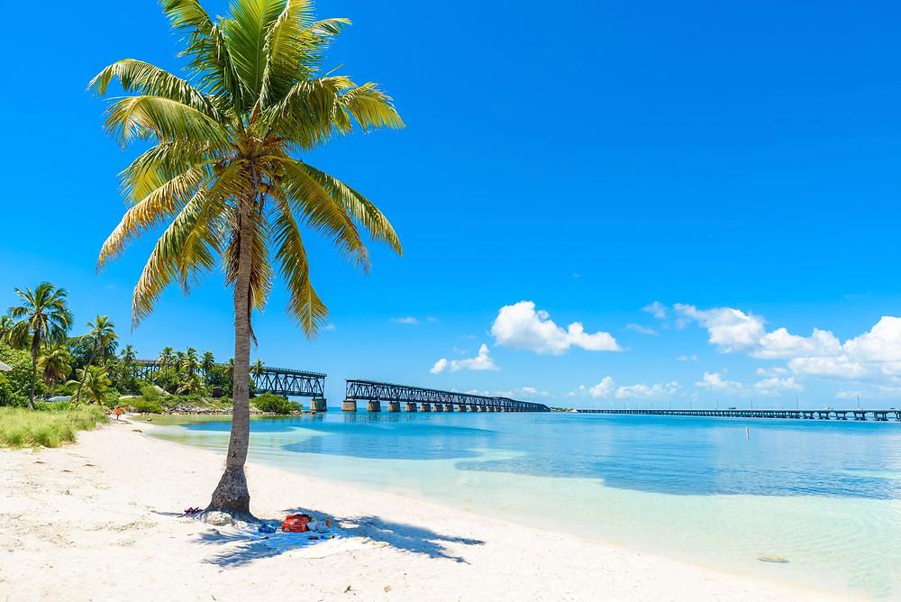 plaża palmy usa floryda