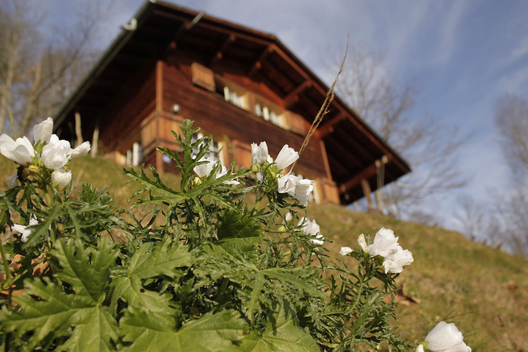 Weissenberge Erlebnis Blumen