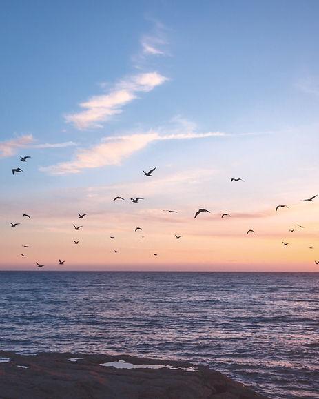 flock%20of%20birds%20flying%20over%20the