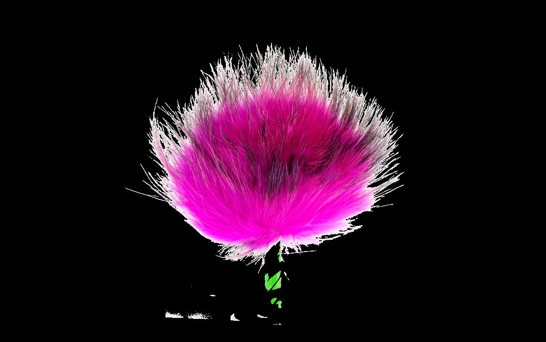 Rose_flash