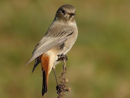 In viaggio con gli uccelli migratori tra montagne, fiumi e lagune