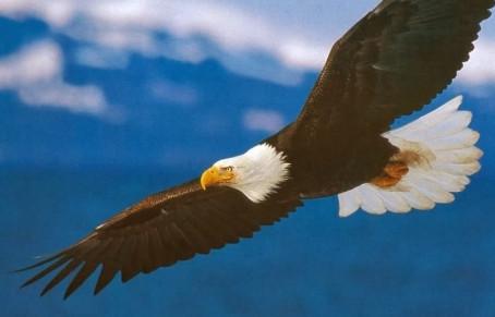 La visione dell'Aquila
