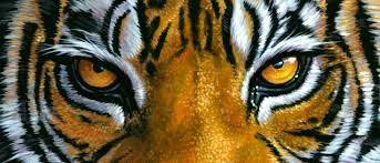 Occhi della tigre