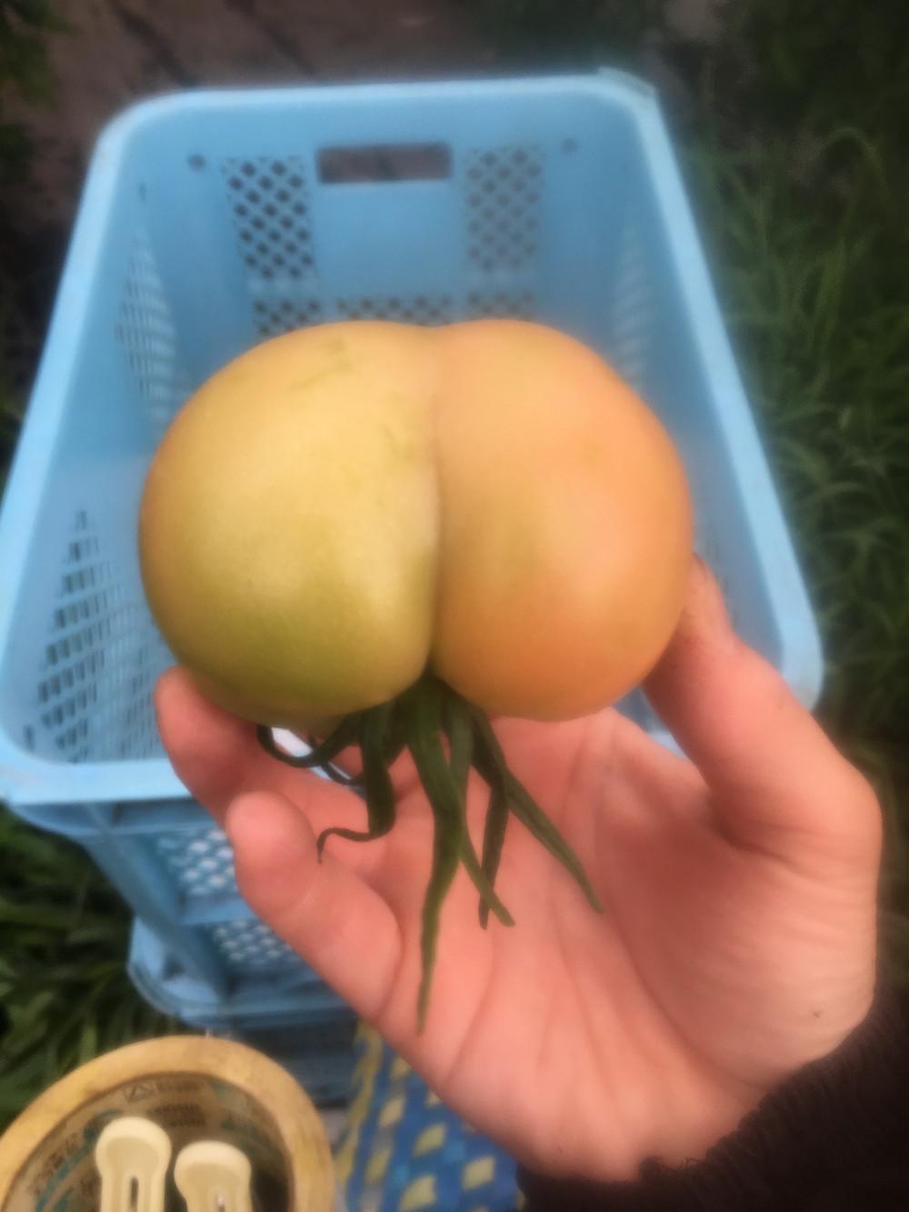 桃尻トマト