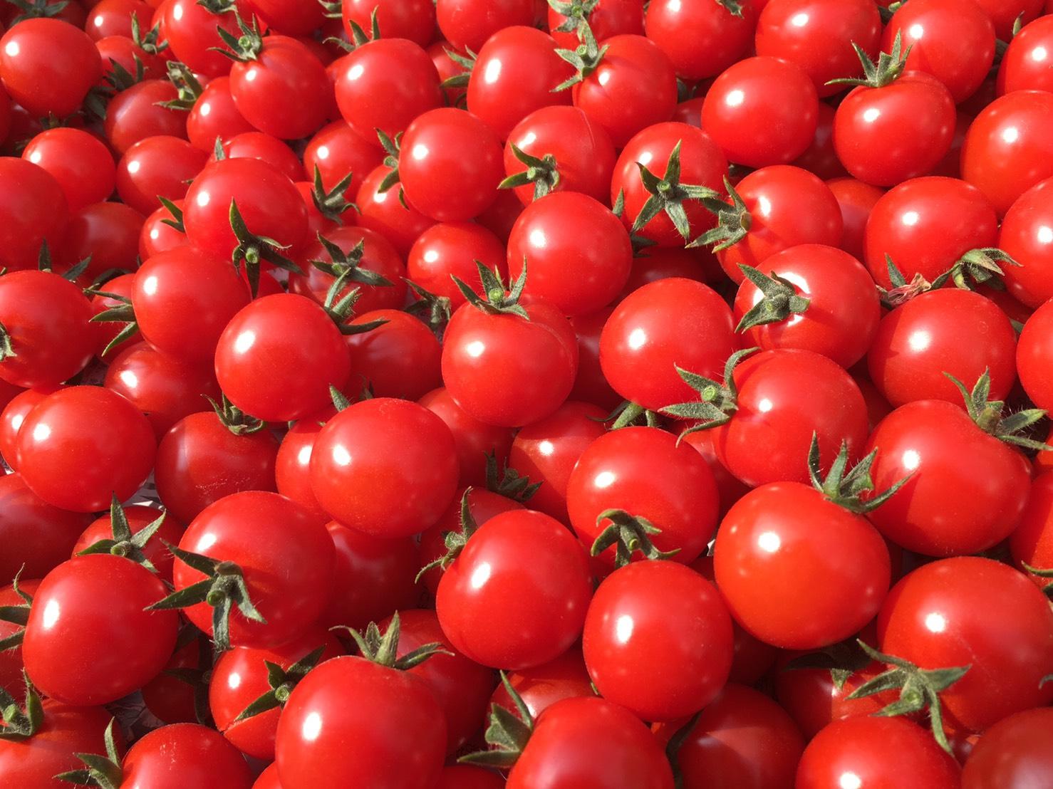 真っ赤に熟れたミニトマト