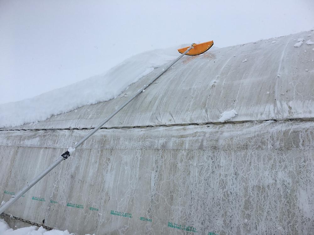 ハウスの雪下ろし中