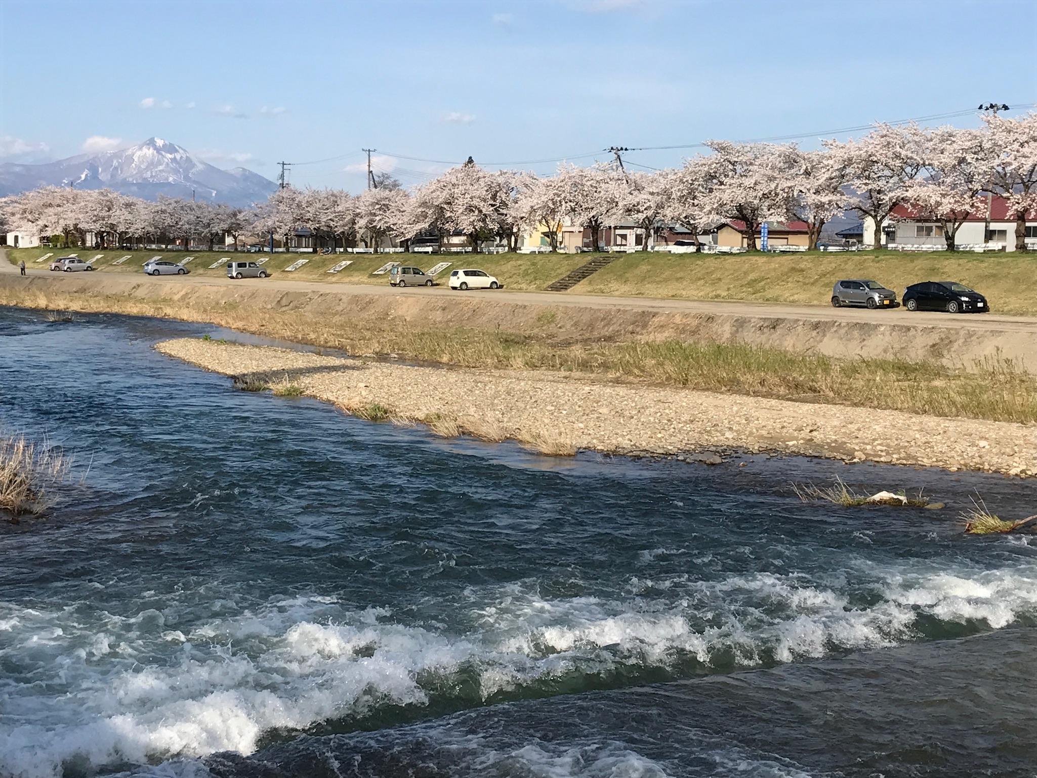 磐梯山と千本桜