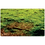 Thumbnail: Brickdrops Forest Play Mat