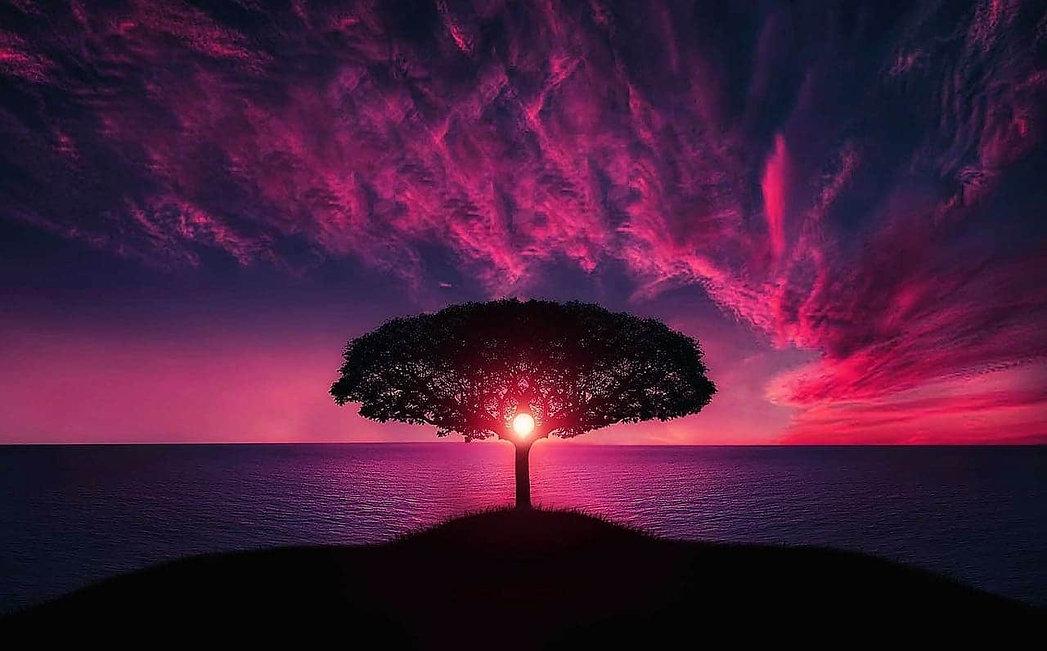 Healingtree.jpg