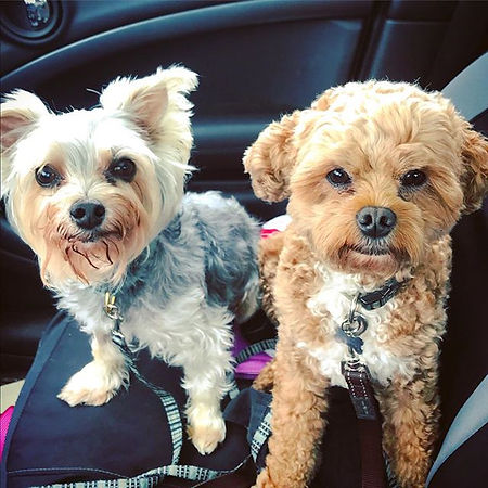My #twobestbuds ready for a #funfullday�