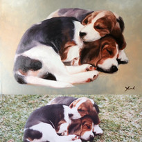 Dogs before and after.jpg