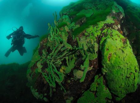 Эндемик Байкала - байкальская губка