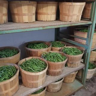 Home grown beans