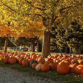 Find a pumpkin in the petting farm