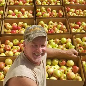 Pre-picked apple harvest
