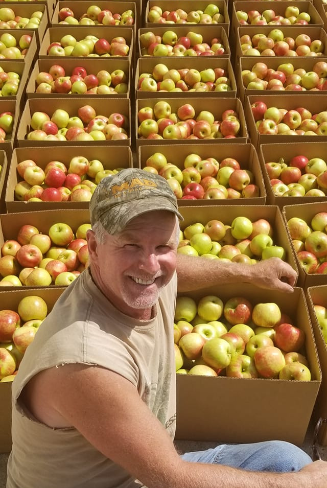 Pre-picked apple harvest