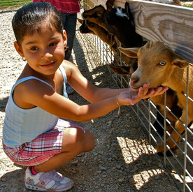 Goats love a good scratch