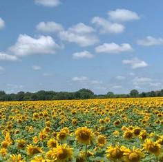 A yellow horizon