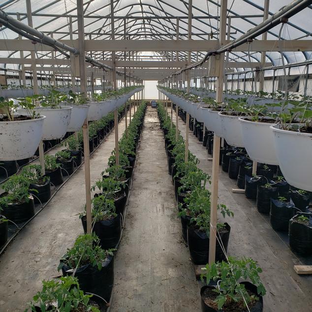 Double-decker greenhouse