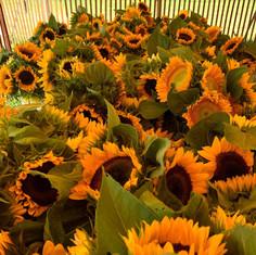 Kat's Cut Flowers