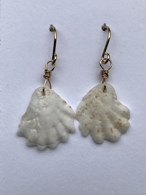 Collected shell earrings
