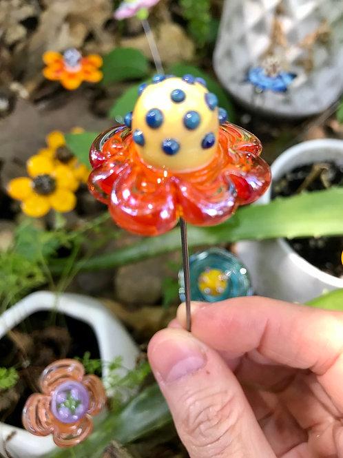 Orange fillagrana 7 petal daisy