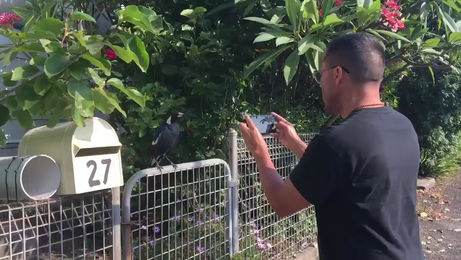 Magpie mimics sound of siren after 'hearing so many fire trucks'