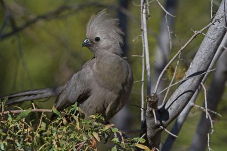 Bird in own environment
