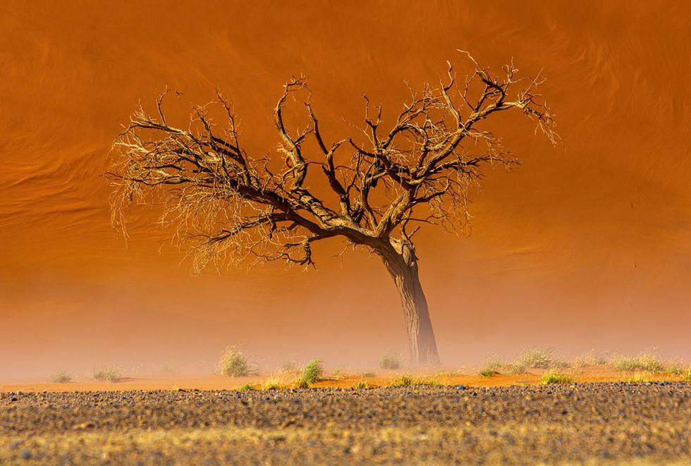Dry Acacia Tree