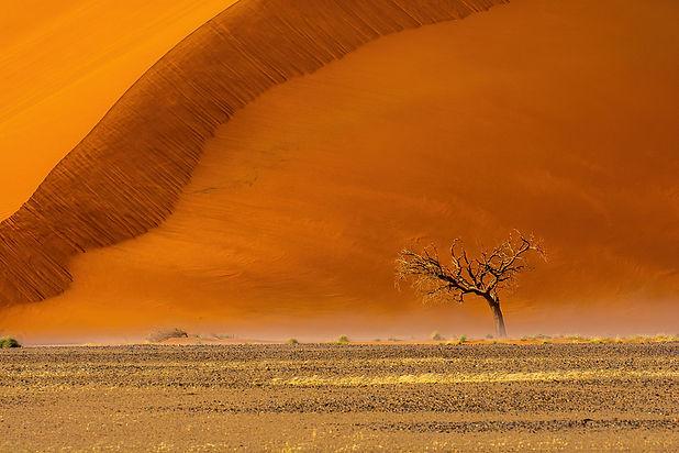 Acacia Tree at Dune 45.jpg