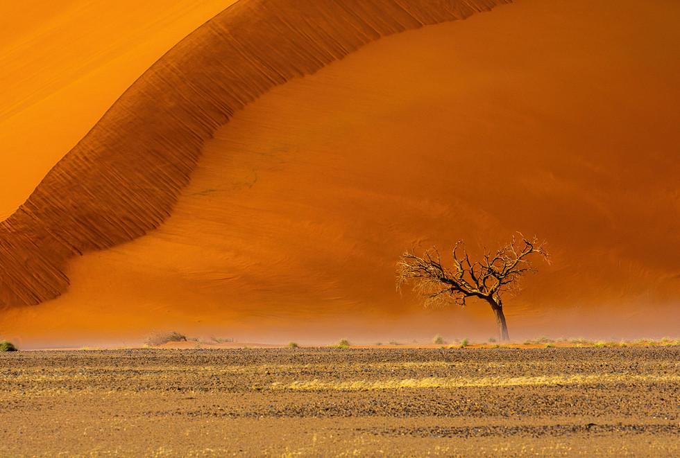Acacia Tree at Dune 45