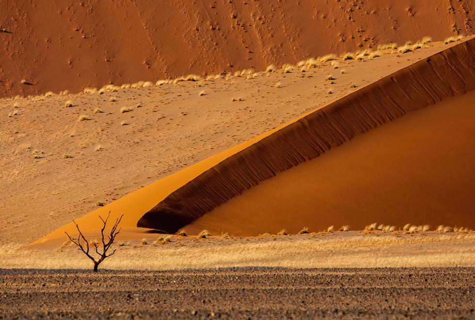 Tree and Dunes