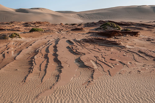Petrified Sandstone LS