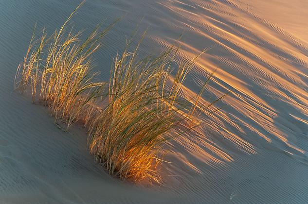 Bushman's Grass