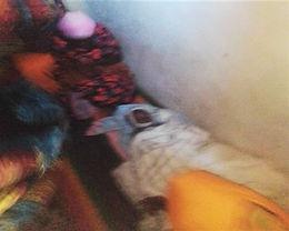 Menino cristão de 6 anos é morto por parentes muçulmanos na Uganda