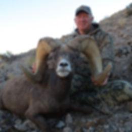 Nevada Desert Bighorn Guides