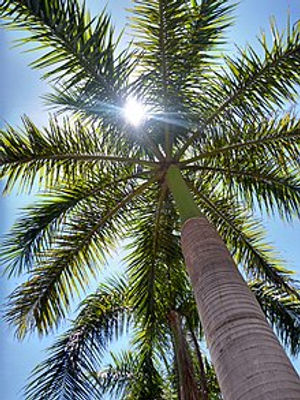 220px-Royal_Palm_worm_view.jpg