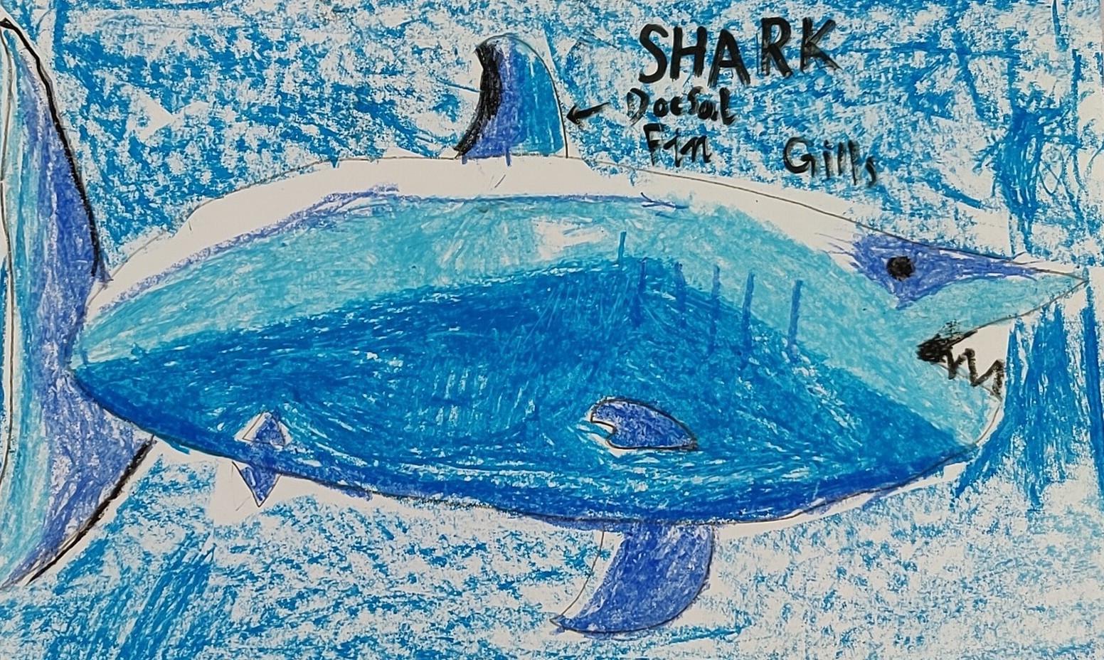 Sharks.jpeg