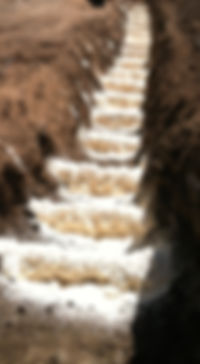 photo of pads in CA_edited.jpg