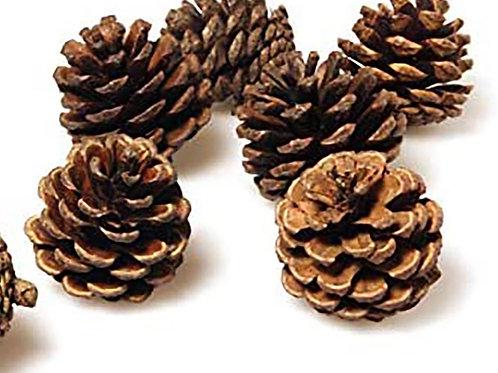 Medium Pine Cones