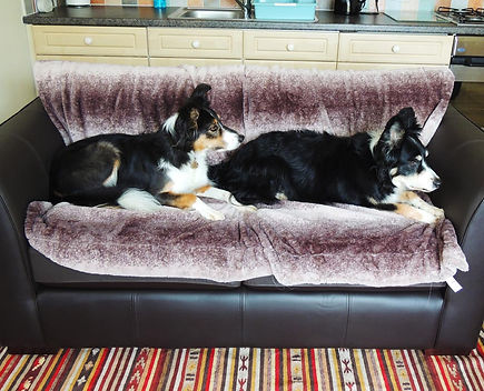 Relaxing Dogs 1.jpg
