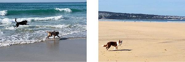 Dog montage Info 1.jpg