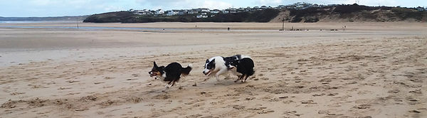 DOG RULES Charging on beach.jpg